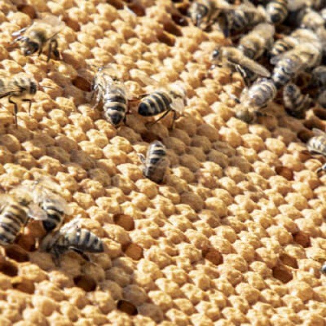 Na návšteve vo Včelej alchýmii